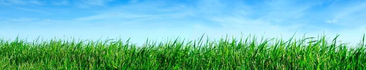 himmelgräs
